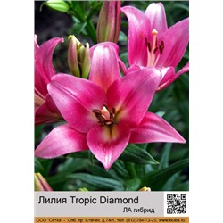 Лилия Tropic Diamond