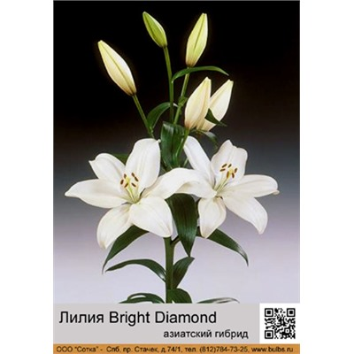 Лилия Bright Diamond